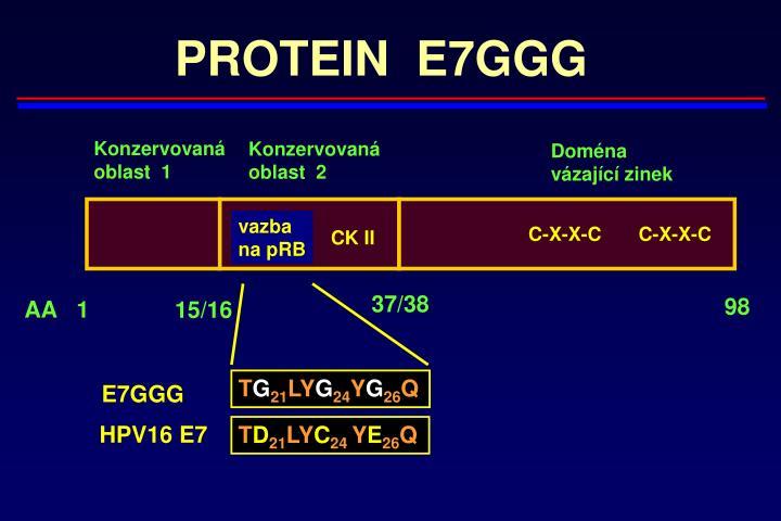 PROTEIN  E7GGG