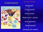 cicatrizaci n1