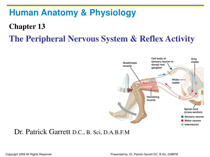 human anatomy and physiology nervous system study guide Bio 1714 anatomy and physiology i, unit 3 froehlich lecture study guide for use with human anatomy and physiology by elaine marieb--5th edition you can also use essentials of human anatomy and physiology.