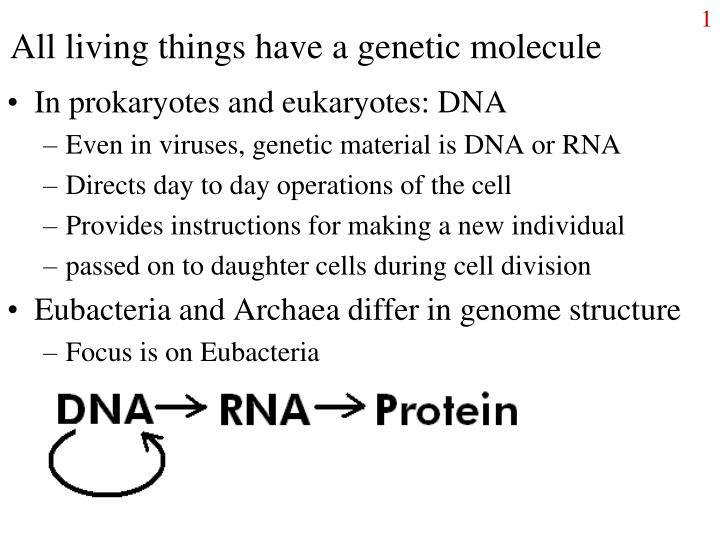 All living things have a genetic molecule