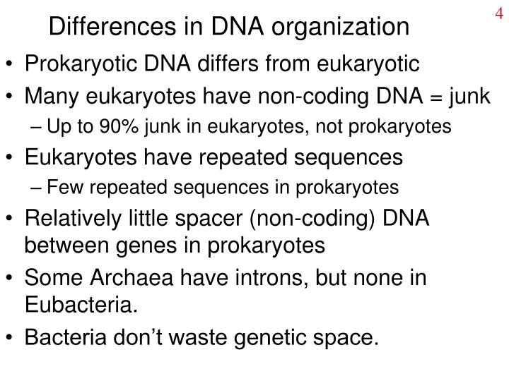 Differences in DNA organization