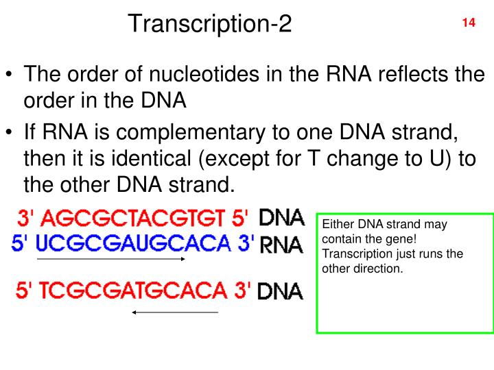 Transcription-2