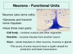 neurons functional units