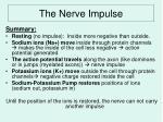 the nerve impulse5