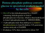 pentose phosphate pathway converts glucose to specialized products needed by the cells