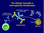 the allergic cascade is interrupted by omalizumab