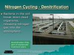 nitrogen cycling denitrification