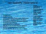rad bzdochy heteroptera