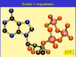 fosfor v organismu