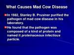 what causes mad cow disease