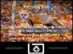 physical trait