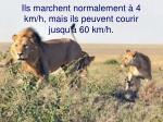 ils marchent normalement 4 km h mais ils peuvent courir jusqu 60 km h