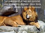 le museau d un lion est comme une empreinte digitale deux lions n auront jamais le m me museau