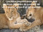 les lions peuvent avoir des tani res capables de contenir de un quatre petits d un an environ