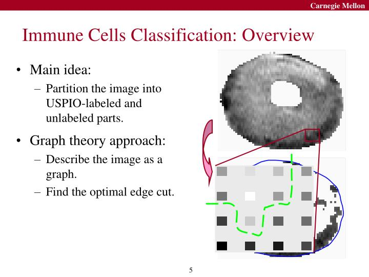 Immune Cells Classification: Overview