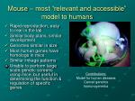 mouse most relevant and accessible model to humans