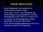 cellule mesoteliali
