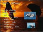 vrste delfinov