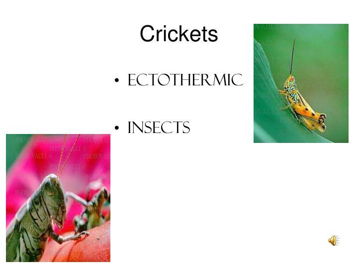 Crickets1