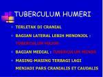 tuberculum humeri