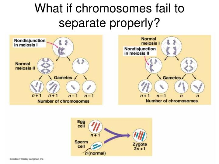 how many chromosomes does each sex cell contribute in Welland