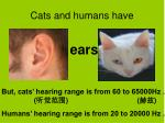 cats and humans have2