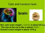 cats and humans have4