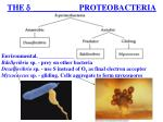 the proteobacteria1