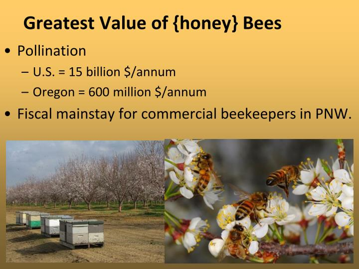 Greatest Value of {honey} Bees