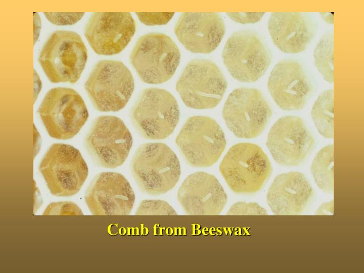 Comb from Beeswax