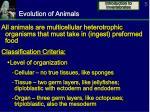 evolution of animals