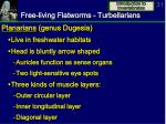 free living flatworms turbellarians