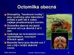 octomilka obecn