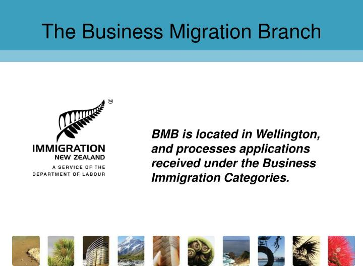 the business migration branch n.