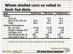whole shelled corn vs rolled in limit fed diets