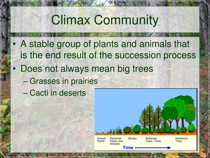 Ppt changes in communities ecological succession powerpoint climax community publicscrutiny Choice Image