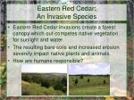 eastern red cedar an invasive species