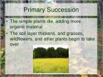 primary succession3