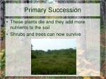 primary succession4