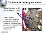 carapa a de tartaruga marinha2