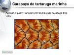 carapa a de tartaruga marinha3
