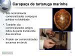carapa a de tartaruga marinha4