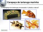 carapa a de tartaruga marinha6