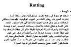 rutting5
