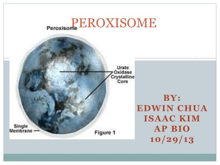 peroxisome n.