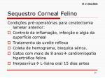 sequestro corneal felino15