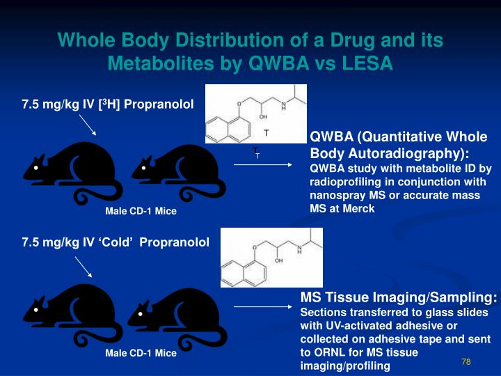 Whole Body Distribution of a Drug and its