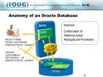 anatomy of an oracle database