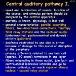 central auditory pathway i