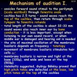 mechanism of audition i